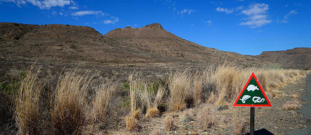 Things to do at the Karoo National Park, www.south-africa-info.co.za